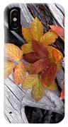 Autumn Driftwood 2 IPhone Case