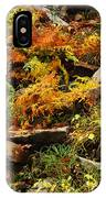 Autumn Ferns On Pickle Creek At Hawn State Park IPhone Case