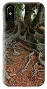 Banyan Tree And Roots In Sarasota Florida IPhone Case