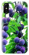 Beautiful Blue Plums On The Tree IPhone Case