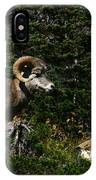 Big Horn Sheep Glacier National Park IPhone Case