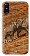 Bighorn Sheep, Zion National Park, Utah IPhone Case