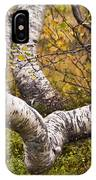 Birch Trees In Autumn Foliage IPhone Case