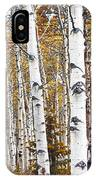 Birch Trees No.0644 IPhone Case