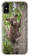 Black Bear Cub Hanging On IPhone Case