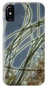 Blue-green Algae IPhone Case