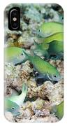 Blue-green Chromis On A Reef IPhone Case