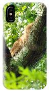 Bobcat In Tree IPhone Case