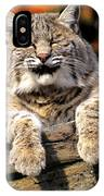 Bobcat Snoozes In The Sun IPhone Case