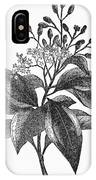 Botany: Cinnamon Tree IPhone Case