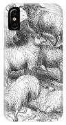 Breeds Of Sheep, 1841 IPhone Case