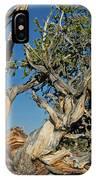 Bristlecone Pine IPhone Case
