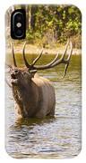 Bugling Bull Elk And Calf Colorado Rut 4 IPhone Case