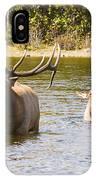 Bugling Bull Elk And Calf Colorado Rut 5 IPhone Case
