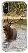 Bugling Bull Elk And Calf Colorado Rut  IPhone Case