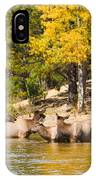 Bull Elk Watching Over Herd 2 IPhone Case