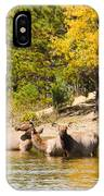 Bull Elk Watching Over Herd 5 IPhone Case