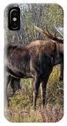 Bull Tolerates Calf IPhone Case