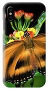 Butterfly Dryadula Heliconius Feeding IPhone Case