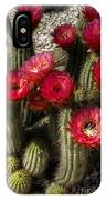 Cactus With Red Flowers IPhone Case
