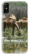 Camels At The Water IPhone Case
