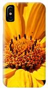 Cheddar IPhone Case