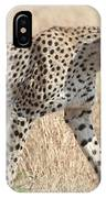 Cheetah Stepping Out IPhone Case
