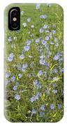 Chicory Flowers (cichorium Intybus) IPhone Case
