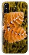 Christmas Tree Worm Spirobranchus IPhone Case