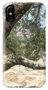 Close Up Olive Tree IPhone Case