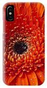 Close Up Orange Mum IPhone Case