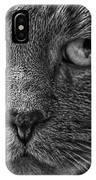 Close Up Portrait Of A Cat IPhone Case
