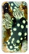 Closeup Of Nudibranch Nembrotha IPhone Case