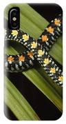Colubrid Snake Boiga Sp A Flying Snake IPhone Case