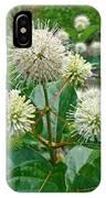 Common Buttonbush - Cephalanthus Occidentalis IPhone Case