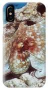 Common Octopus IPhone Case