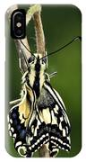 Common Swallowtail Butterfly IPhone Case