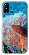 Coral Hind IPhone Case