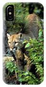 Cougar Coming Through IPhone Case