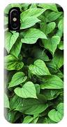 Creeping Navelwort (omphalodes 'alba') IPhone Case