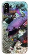 Creole Wrasse At A Cleaning Station IPhone Case