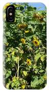 Crows In The Sunflowers IPhone Case