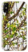 Cucumber Tree Blossoms IPhone Case