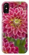 Dahlia Dahlia Sp Optimist Variety IPhone Case