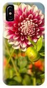 Dalhia In Bloom  IPhone Case