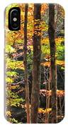 Dappled Sun On Fall Colors IPhone Case
