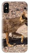 Death Valley Coyote IPhone Case