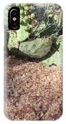 Desert's Collection Of Dried Flowers1 IPhone Case