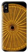 Diatom Alga, Arachnoidiscus IPhone Case