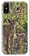Dingo In The Wild V3 IPhone Case